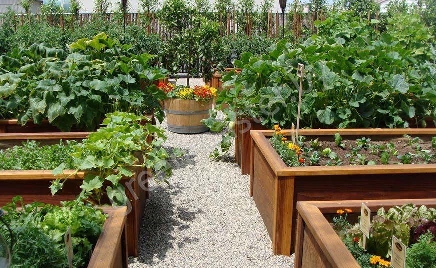 Ящики для посадки овощей