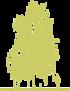 2-bereza-borodavchataya-betula-pendula-crispa-siluet.png