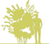 3-beresklet-evropejskij-euonymus-europaeus-red-cascade-siluet.png