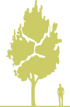 1-bereza-belaya-kitayskaya-betula-albosinensis-fascination.png