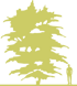 1-bagryanik-yaponskiy-cercidiphyllum-japonicum-siluet.png