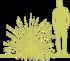 10-rakitnik-rannij-cytisus-x-praecox-allgold-siluet.png