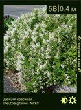 Дейция-красивая-Deutzia-gracilis-'Nikko'
