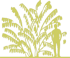 14-beresklet-probkovyj-euonymus-phellomanus-siluet.png