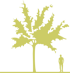 12-vishnya-korotkoshchetinistaya-prunus-x-subhirtella-autumnalis-rosea.png
