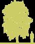 6-yasen-pensilvanskiy-fraxinus-pennsylvanica-siluet.png