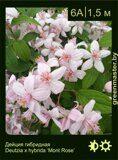 Дейция-гибридная-Deutzia-x-hybrida-'Mont-Rose'