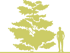 10-deren-suprotivnolistnyj-cornus-alternifolia-siluet.png