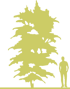 3-bagryanik-yaponskiy-cercidiphyllum-japonicum-rotfuchs.png