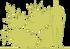 1-biryuchina-tupolistnaya-regelya-ligustrum-obtusifolium-var.png