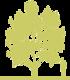 1-magnoliya-bruklinskaya-magnolia-x-brooklynensis-yellow-bird-siluet.png