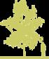 7-bereza-borodavchataya-betula-pendula-purpurea-siluet.png