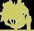 1sliva-rastopyrennaya-prunus-cerasifera-hessei.png