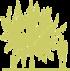 4-yablonya-malus-golden-hornet-siluet.png
