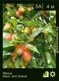 Яблоня-Malus-'John-Downie'